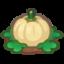 Ripe White-Pumpkin Plant