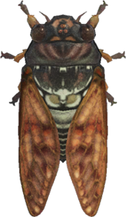 Brown Cicada NH.png
