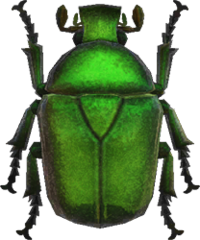 Drone Beetle NH.png