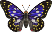 Great Purple Emperor NH.png