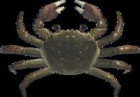 Mitten Crab NH.png