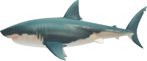 Great White Shark NH.png
