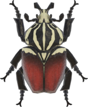 Goliath Beetle NH.png