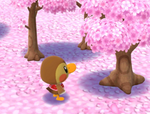 A Scenic Sakura Treat PC.png