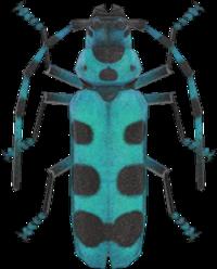 Rosalia Batesi Beetle NH.png