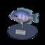 Bluegill Model