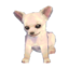 Chihuahua Model