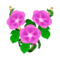 Pink Morning Glory PC Icon.png