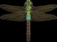 Artwork of Darner Dragonfly