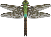 Darner Dragonfly NH.png