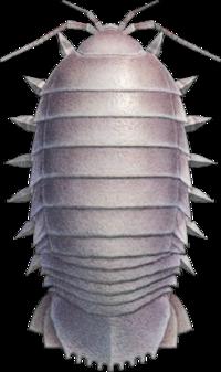 Giant Isopod NH.png