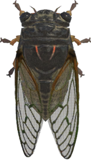 Giant Cicada NH.png