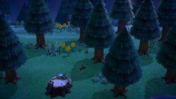 Mystery Island 17 NH.jpg