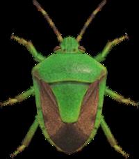 Stinkbug NH.png