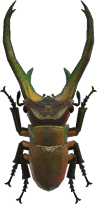 Cyclommatus Stag NH.png
