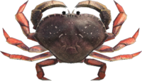 Dungeness Crab NH.png