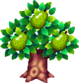 PearTreeWW.png