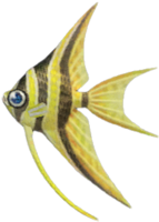 Angelfish NH.png