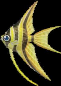 Angelfish NH.png