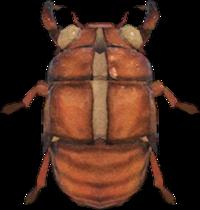 Cicada Shell NH.png