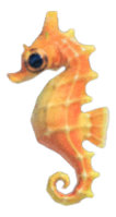 Sea Horse NH.png