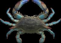 Artwork of Gazami Crab