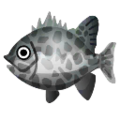 Spotted Knifejaw PC Icon.png