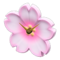 Cherry-Blossom Clock (Pink-White) NH Icon.png