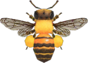 Honeybee NH.png
