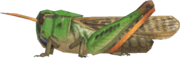 Migratory Locust NH.png