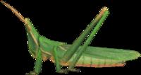 Long Locust NH.png