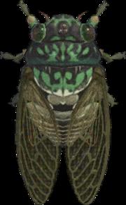 Robust Cicada NH.png
