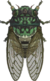 Robust Cicada NH.png