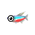 Neon Tetra PC Icon.png