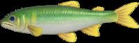 Sweetfish NH.png
