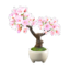 Cherry-Blossom Bonsai