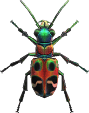 Tiger Beetle NH.png