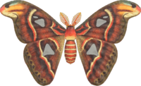 Atlas Moth NH.png