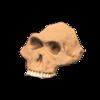Australopith