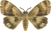 Moth NH.png