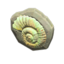 Fossil Doorplate