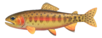 Golden Trout NH.png