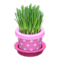 Cat Grass (Pink) NH Icon.png