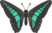 Common Bluebottle NH.png