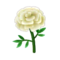 White Marigold PC Icon.png