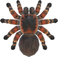 Artwork of Tarantula