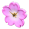 Cherry-Blossom Clock (Pink) NH Icon.png
