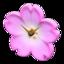 Cherry-Blossom Clock