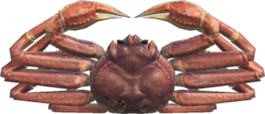 Snow Crab NH.png