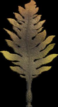 Seaweed NH.png